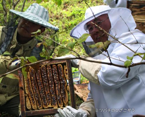 TAO食育菜園・採蜜・ニホンミツバチ