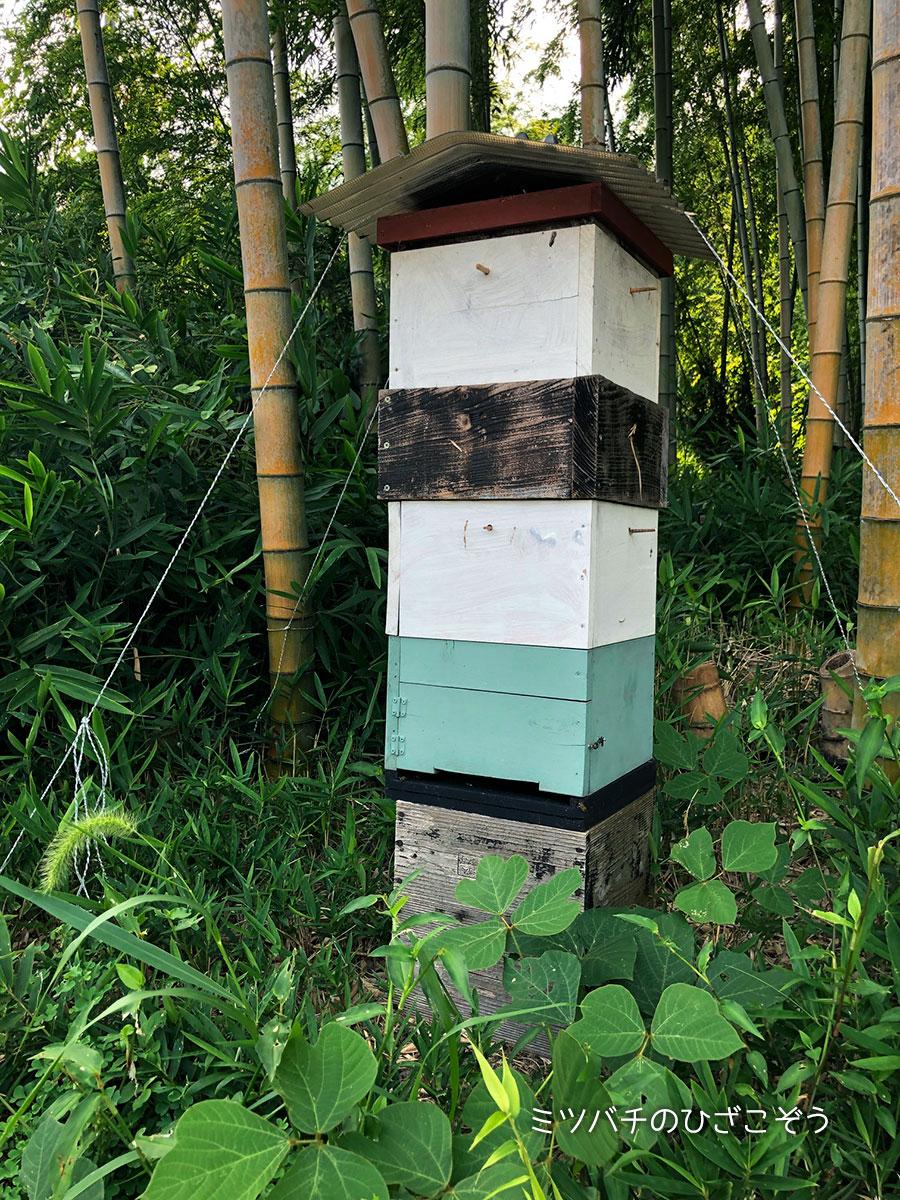 ニホンミツバチ・二上山