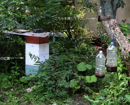 ニホンミツバチ・六甲山