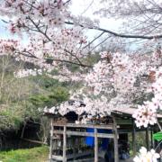 日本ミツバチ・赤目