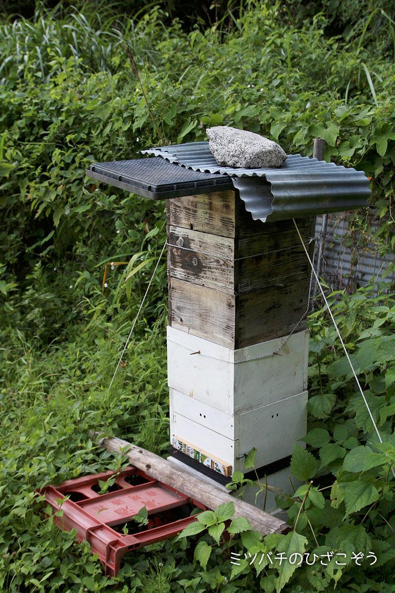 ニホンミツバチ・杉浦農園